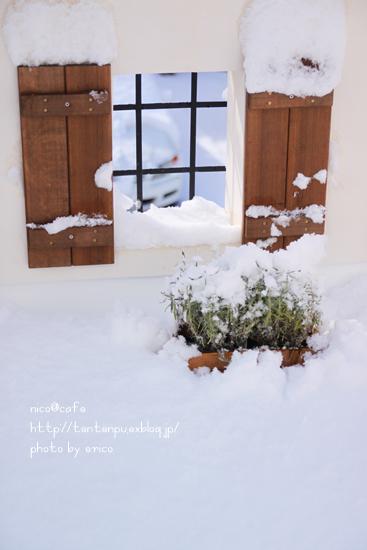雪の日の一日_f0192151_2253924.jpg
