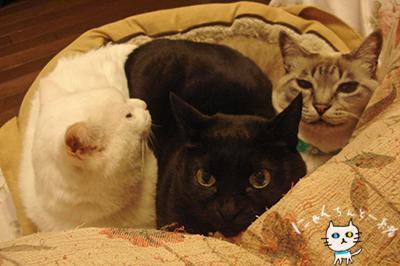 本日の猫盛り_e0031853_13381561.jpg