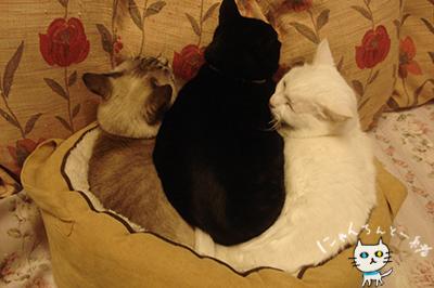 本日の猫盛り_e0031853_13383097.jpg