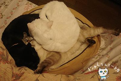 本日の猫盛り_e0031853_13385039.jpg