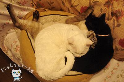 本日の猫盛り_e0031853_13392339.jpg