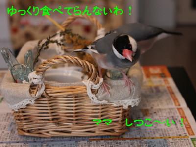 b0158061_21105931.jpg