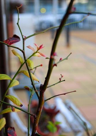 春の訪れ_b0161661_1791676.jpg
