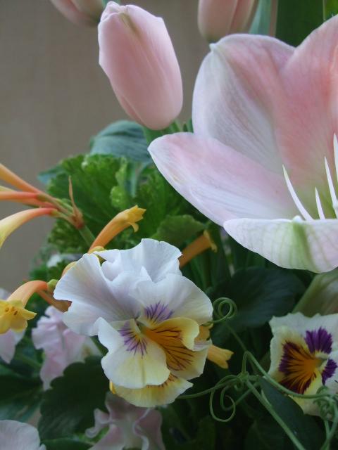 オークリーフ(アマリリスと春の草花のアレンジメント)_f0049672_1127882.jpg
