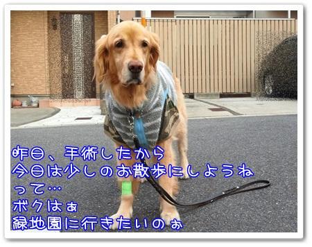 c0107886_04407.jpg