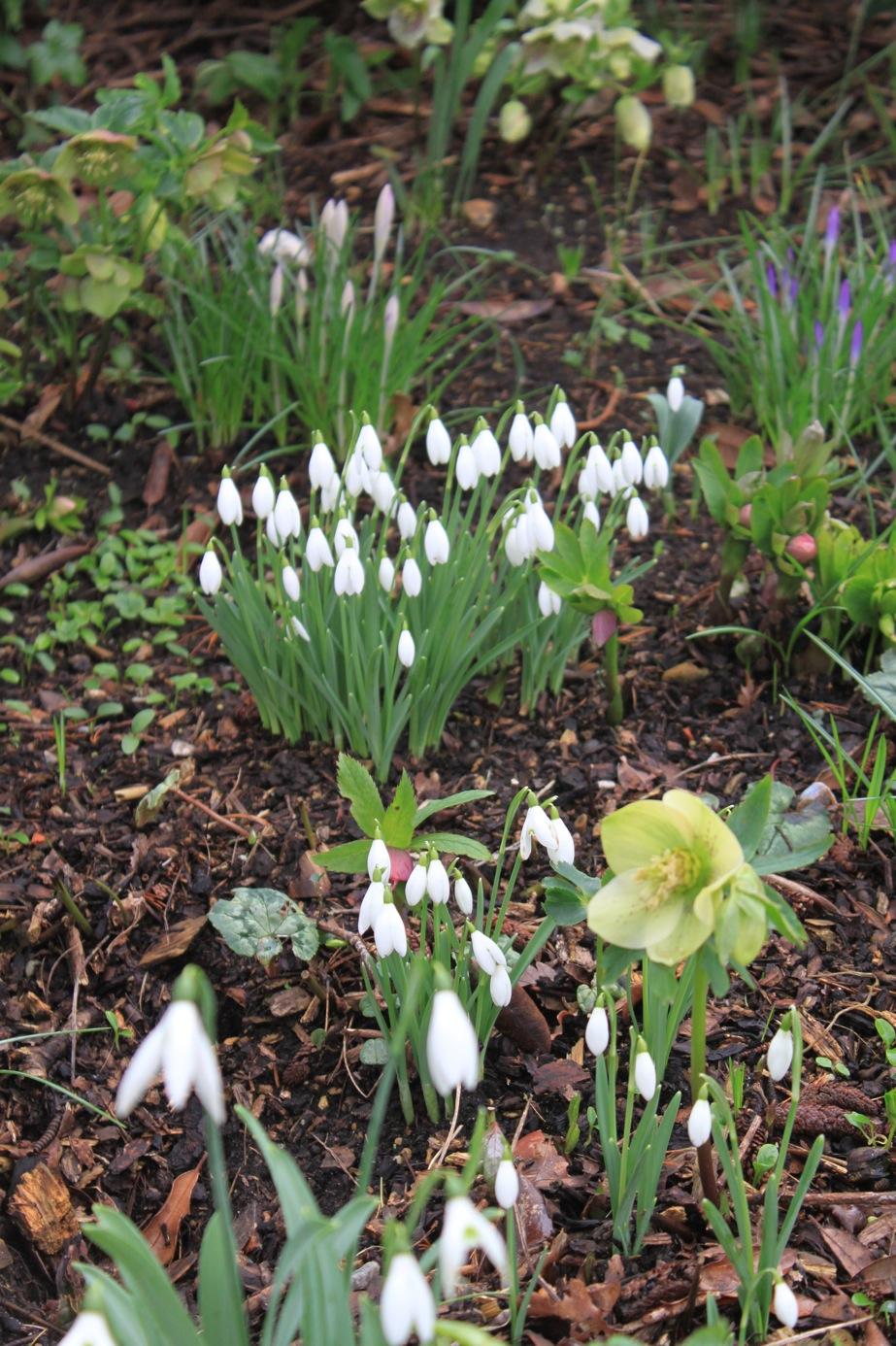 春まであと一歩、、、かな_a0137487_20515861.jpg
