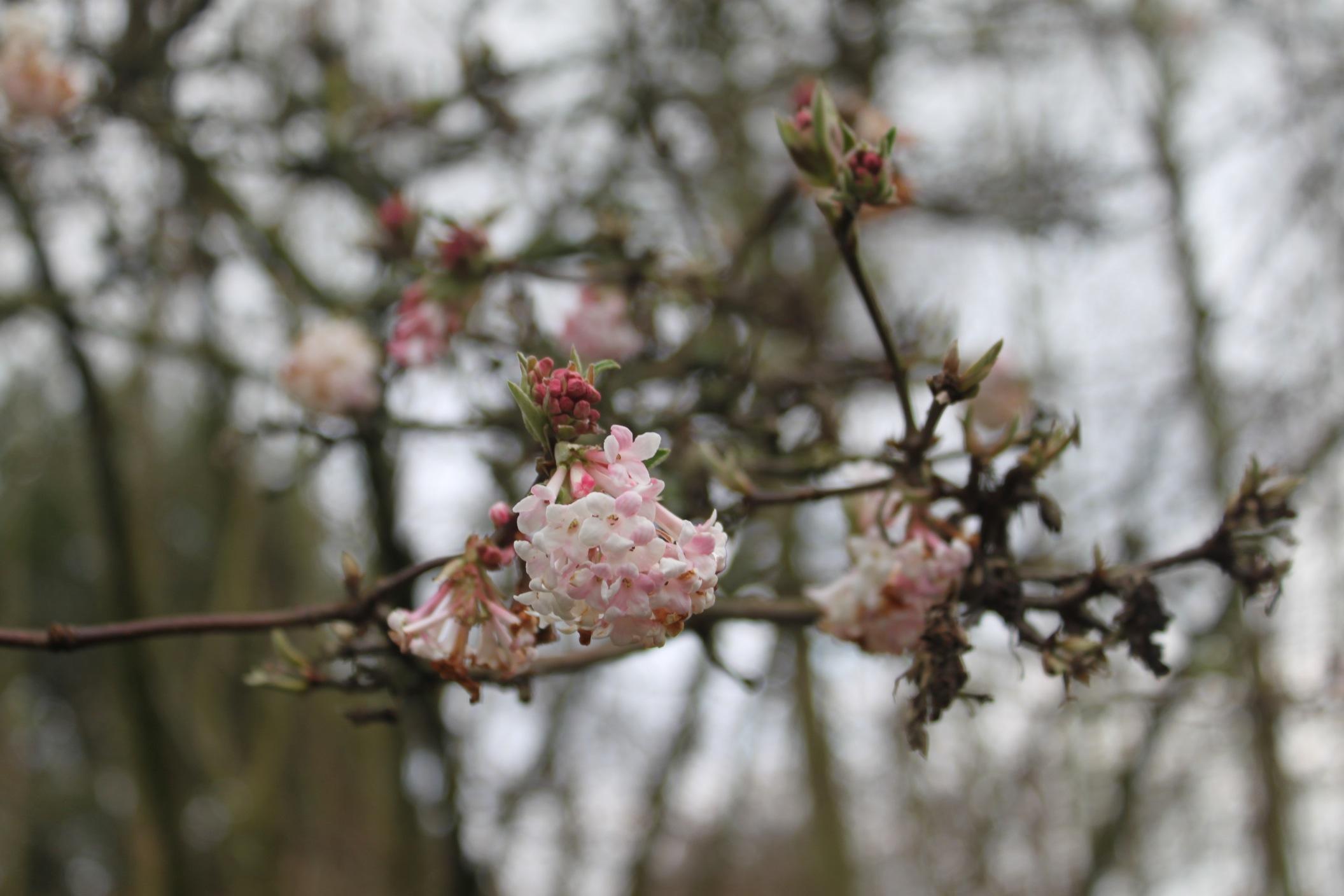 春まであと一歩、、、かな_a0137487_20574941.jpg
