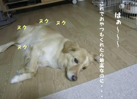 c0196992_18411250.jpg