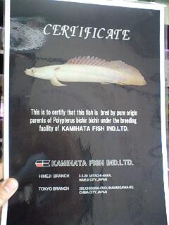 凄い魚・その1_b0141806_23101184.jpg