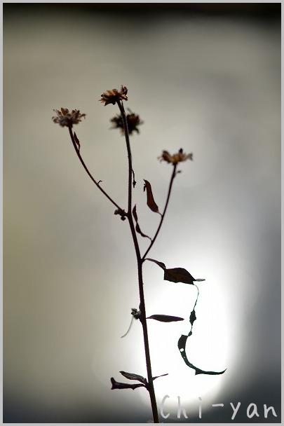 ニコン・カレッジ 「冬枯れの造形を撮ろう」_e0219011_1959936.jpg