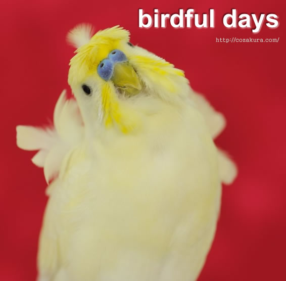 Birdful days