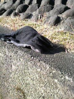 2012冬の手袋コレクション_f0228680_919210.jpg