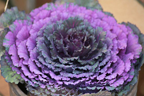 コゲラと、色が美しいバンダ_f0030085_1951141.jpg