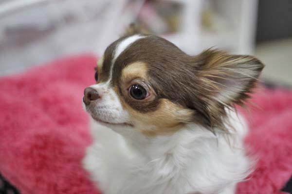 犬小屋御殿のおコさまたち♪_e0092286_16314622.jpg