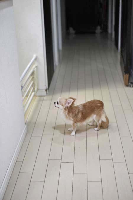 犬小屋御殿のおコさまたち♪_e0092286_16322037.jpg