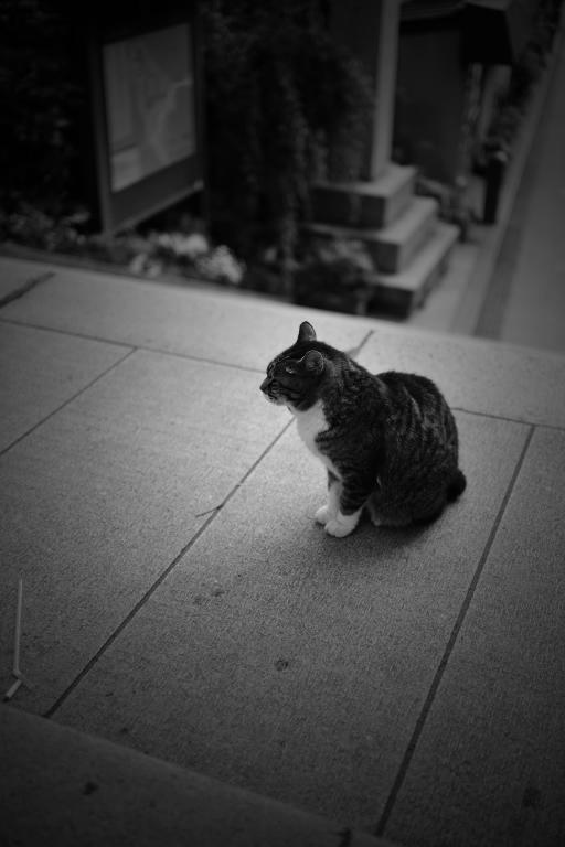 猫_d0119505_338127.jpg