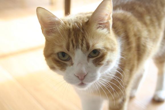 猫は家につく、猫叉は人に憑く?_b0019333_14295164.jpg