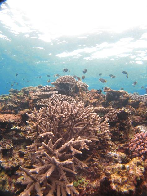 2月4日今日から海も回復の兆し!!_c0070933_23281213.jpg