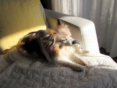 犬の13歳は人間でいうと…_c0038434_21391848.jpg