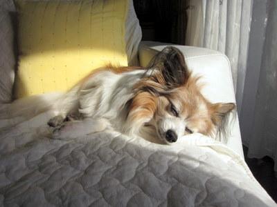 犬の13歳は人間でいうと…_c0038434_2139543.jpg