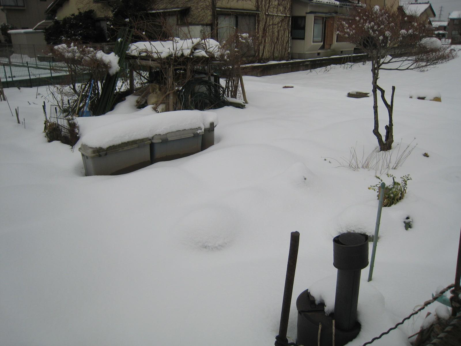 大雪のため畑は放置プレイ状態に。。_e0121558_128869.jpg