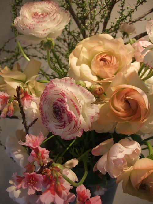 オークリーフ(寒桜と雪柳と・・)_f0049672_10303344.jpg