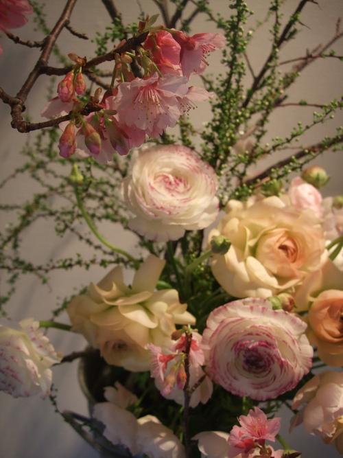 オークリーフ(寒桜と雪柳と・・)_f0049672_1033022.jpg
