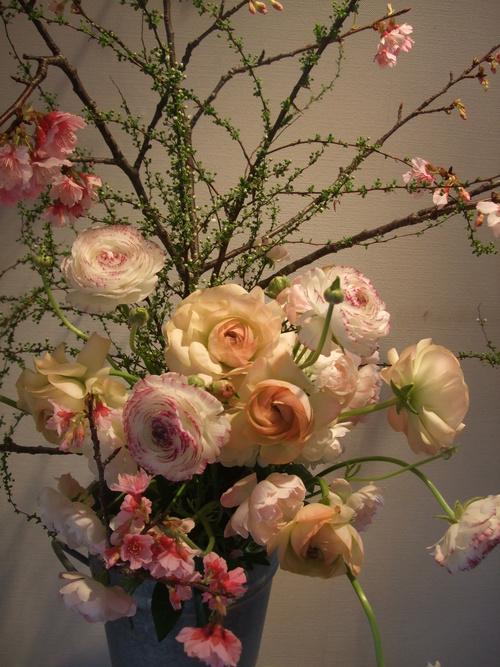 オークリーフ(寒桜と雪柳と・・)_f0049672_10331134.jpg