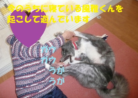 f0121712_15182579.jpg