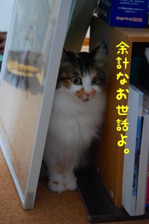 c0181639_23412122.jpg