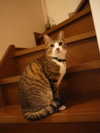 猫のお友だち じょあんちゃんはんくすちゃんあーるくん編。_a0143140_23215678.jpg