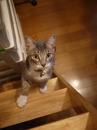 猫のお友だち じょあんちゃんはんくすちゃんあーるくん編。_a0143140_23242267.jpg
