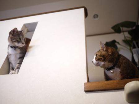 猫のお友だち じょあんちゃんはんくすちゃんあーるくん編。_a0143140_2325315.jpg