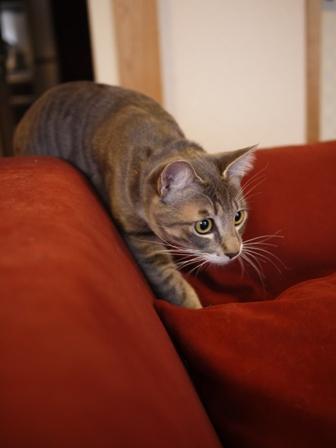 猫のお友だち じょあんちゃんはんくすちゃんあーるくん編。_a0143140_23282622.jpg