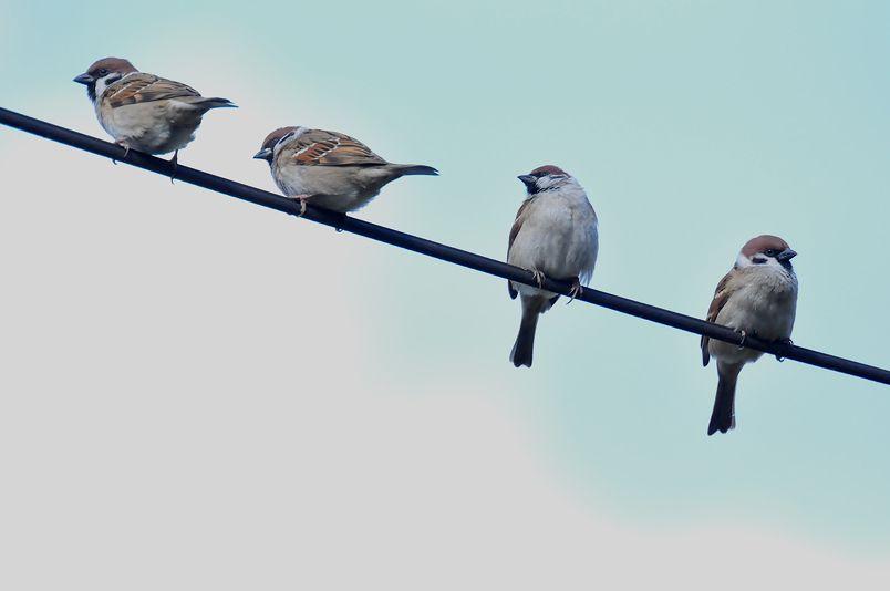 2月4日(晴れ時々くもり)タイトル:鳥不作でネタ切れ_f0105542_17282389.jpg