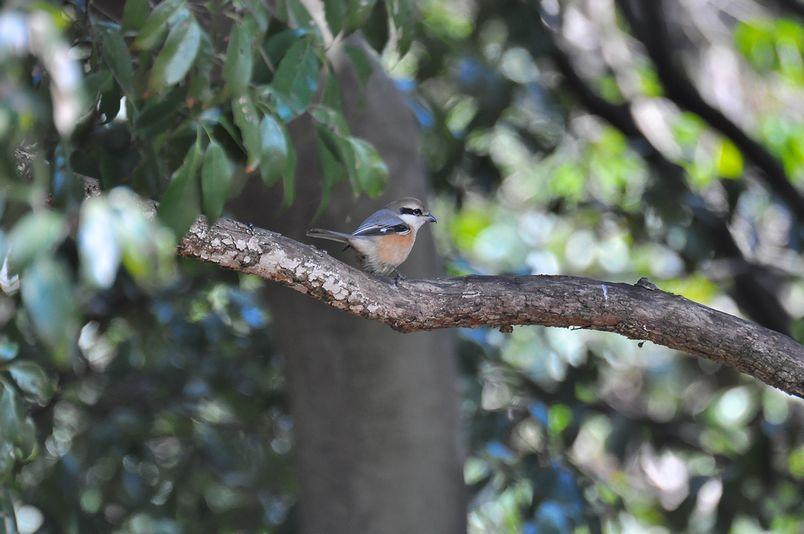 2月4日(晴れ時々くもり)タイトル:鳥不作でネタ切れ_f0105542_17285710.jpg