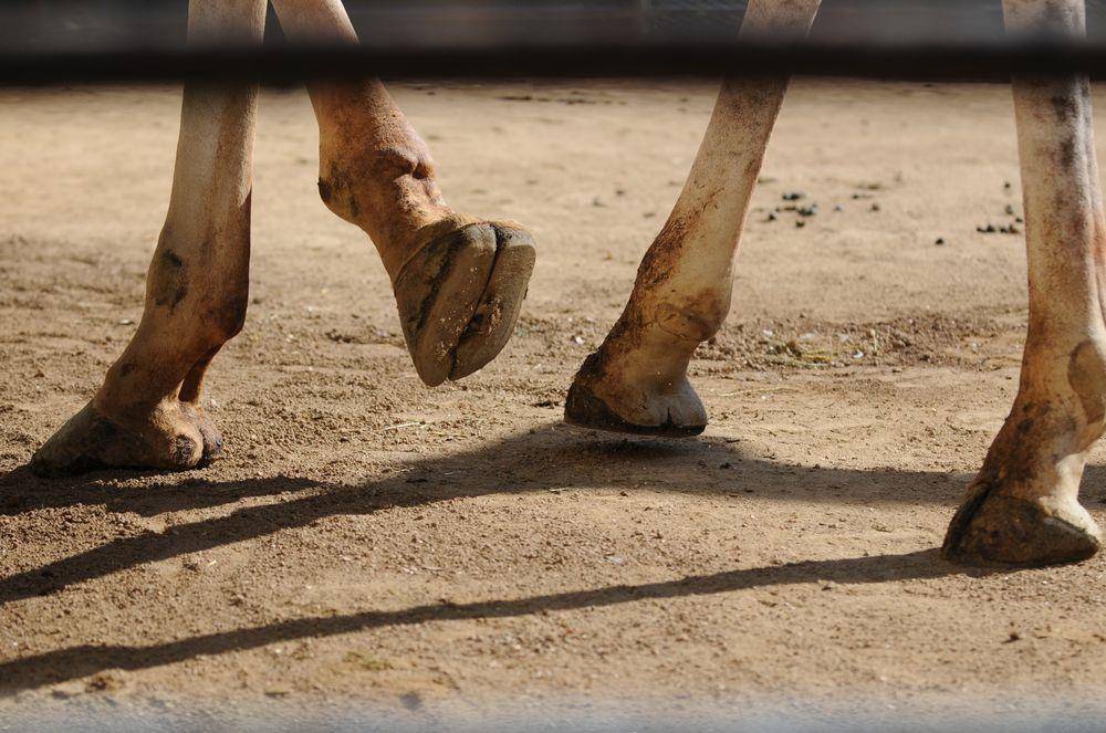 蹄が気になって・・・_b0024758_23465061.jpg