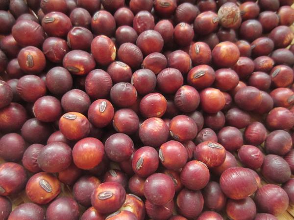 収穫した豆_d0231263_23345665.jpg