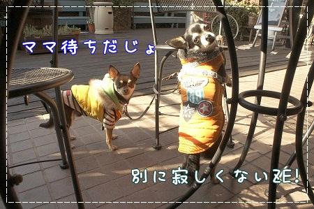 【わんことカフェ】BackYard@つくば_a0091865_11592851.jpg