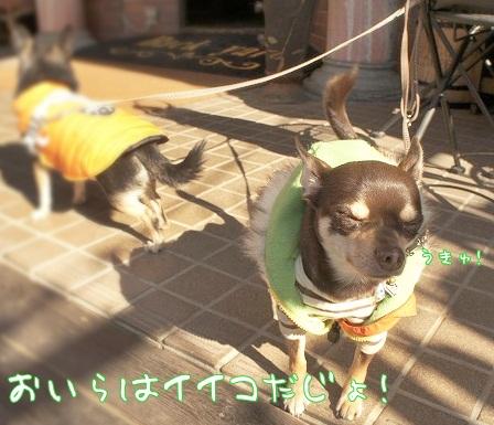 【わんことカフェ】BackYard@つくば_a0091865_1216810.jpg
