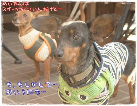 【わんことカフェ】BackYard@つくば_a0091865_125167.jpg