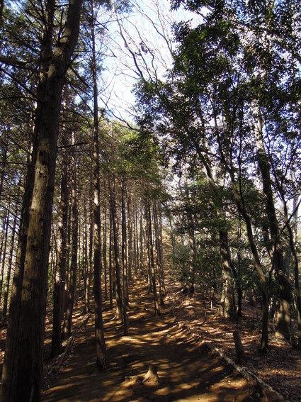 セラピーロード  ~白山順礼峠コース~_e0231387_1275226.jpg