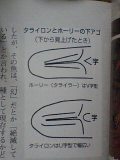 2012年熱帯魚入荷情報!Vol.05 (2/1~2/6)_b0141806_1443864.jpg
