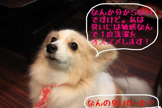 b0130018_10254755.jpg