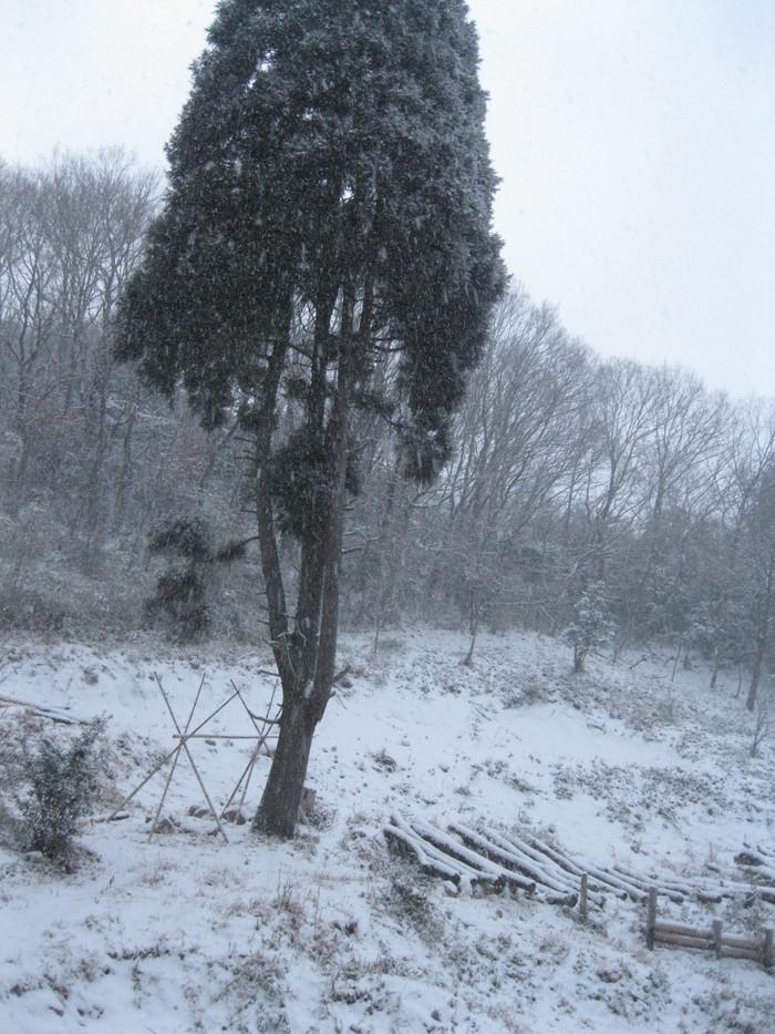 雪景色_a0125419_10455676.jpg