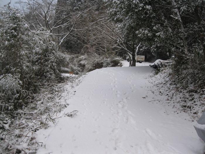 雪景色_a0125419_10462578.jpg