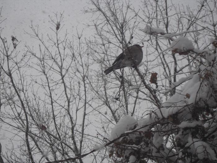 雪景色_a0125419_1051331.jpg