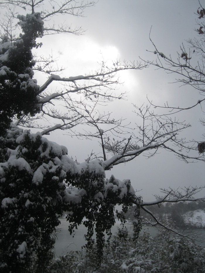 雪景色_a0125419_1059880.jpg
