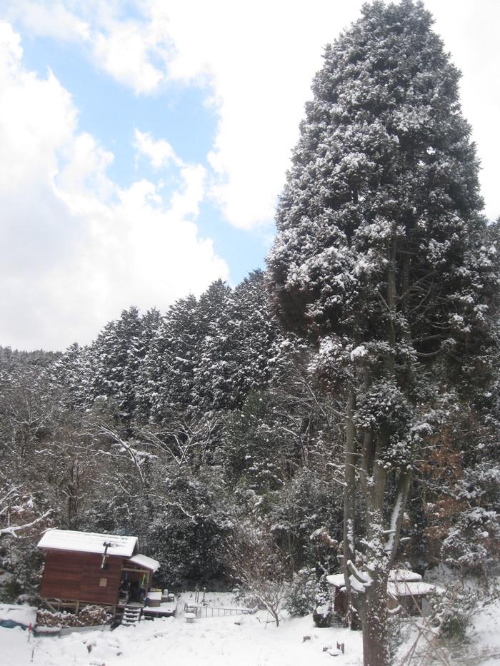 雪景色_a0125419_11113083.jpg
