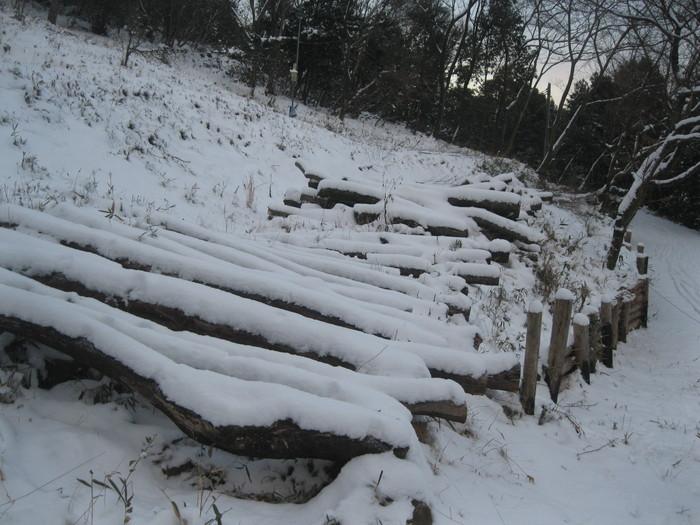 雪景色_a0125419_1125201.jpg